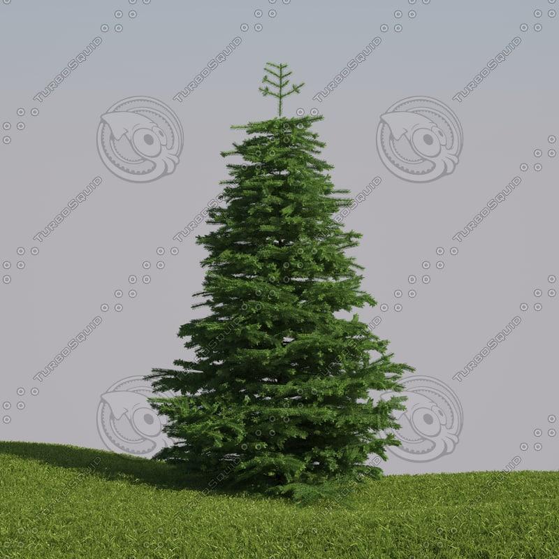 Tree Abies fraseri