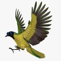 Blue Jay 3D models