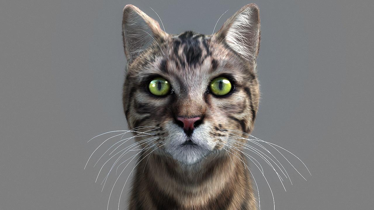 cat_fur_12a.jpg