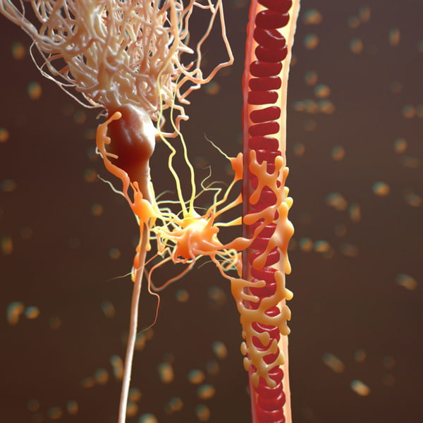 Neuron Astrocyte Blood Vessel realistic 3D Models