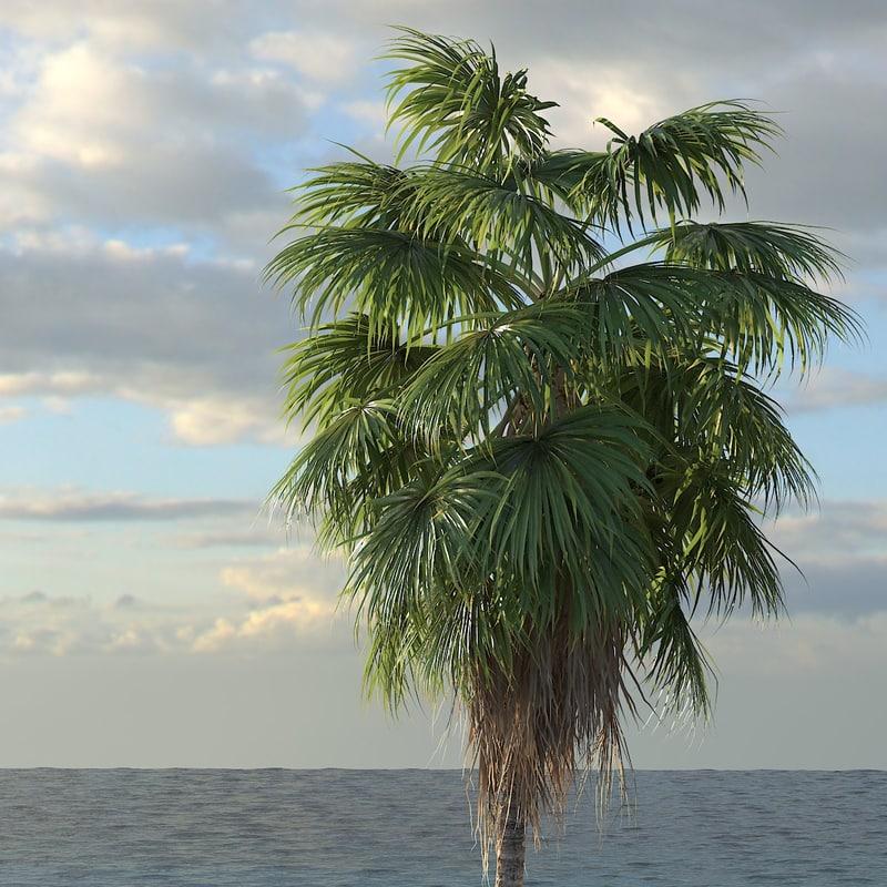 palm_washingtonia01_f_0001.jpg
