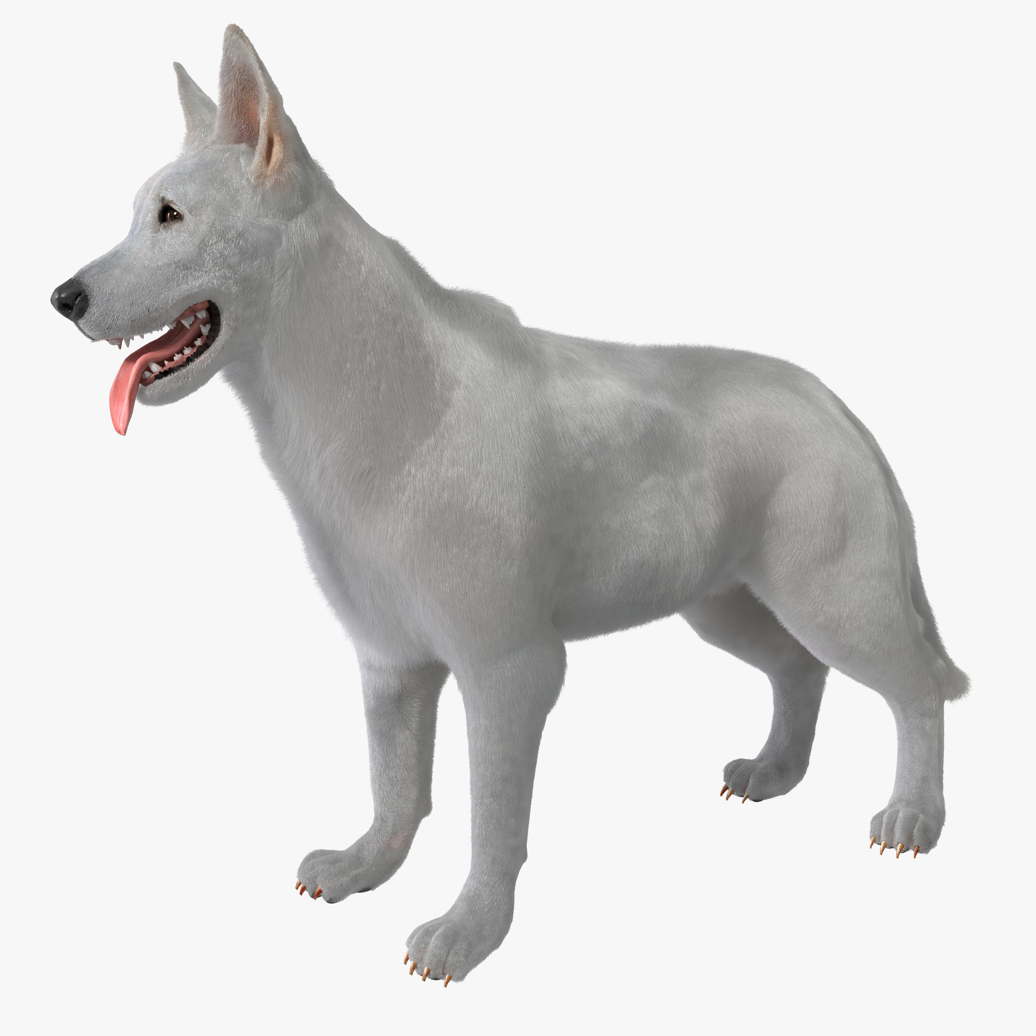 White Shepherd Dog Rigged Fur