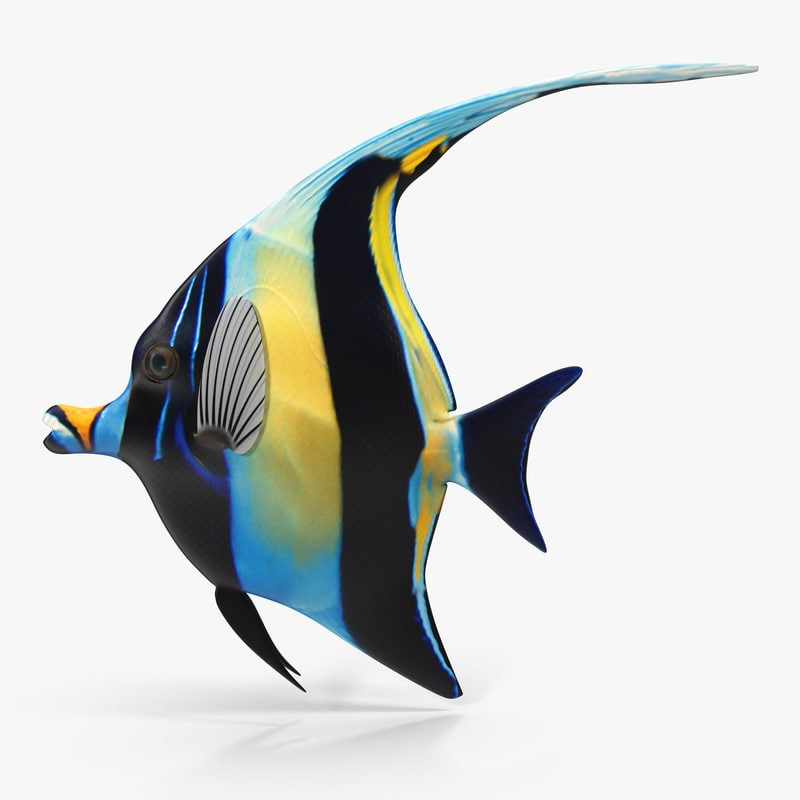 Moorish Idol Blue Rigged