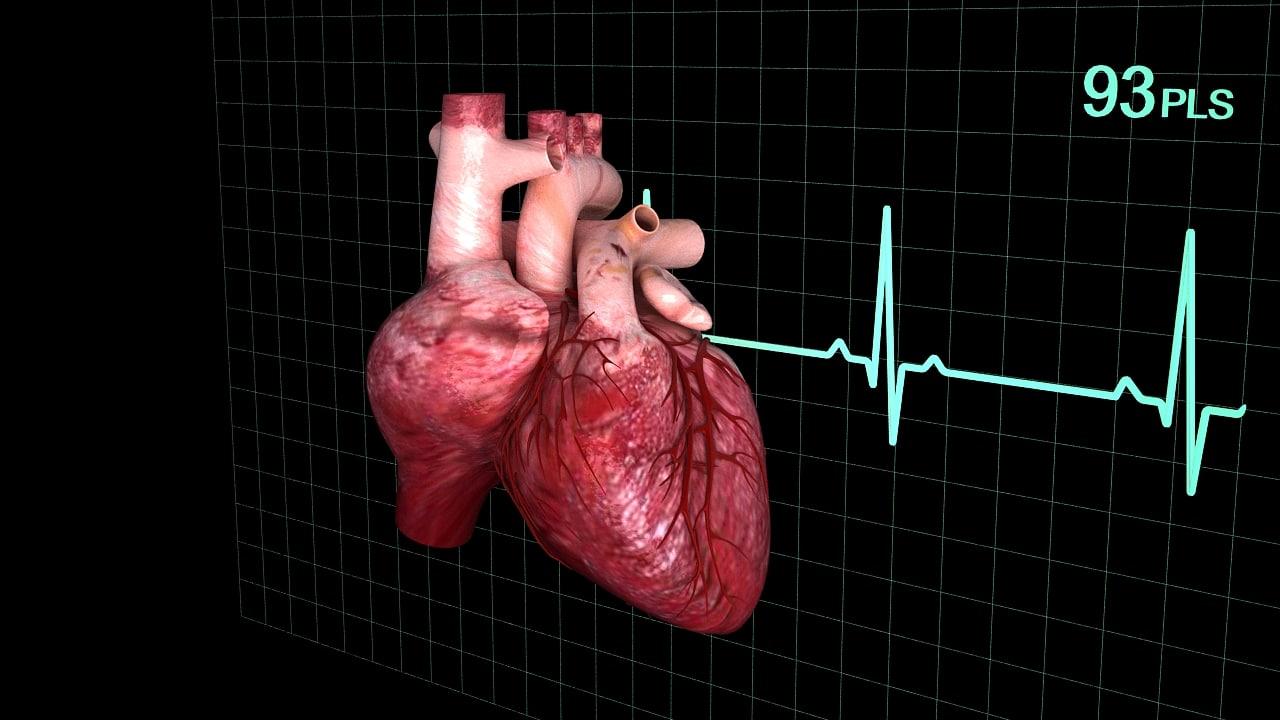 human heart1.jpg