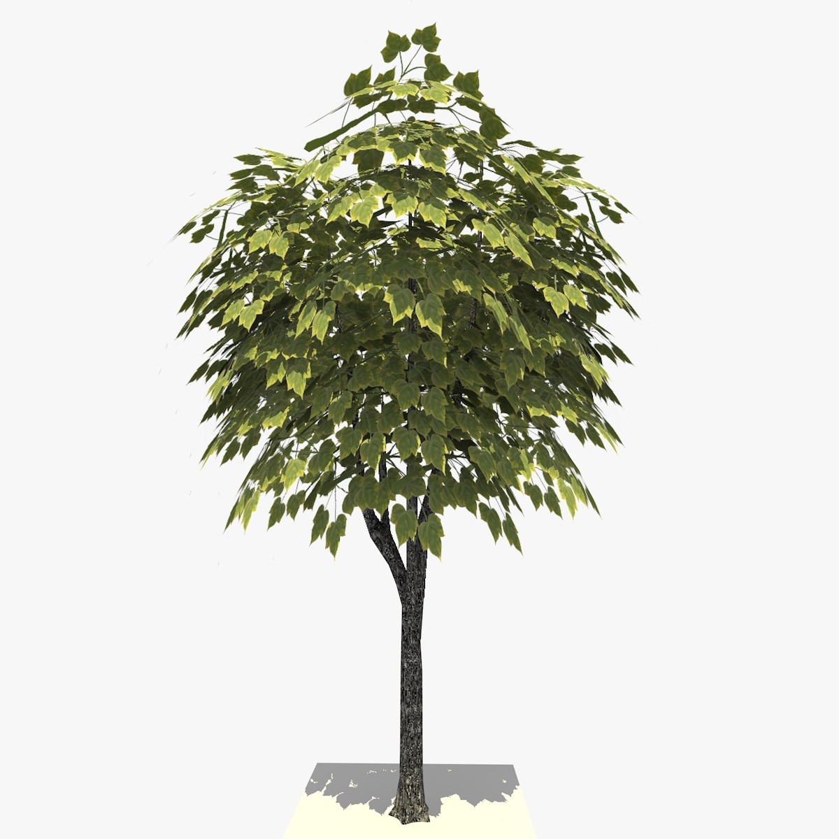3 TREE 17 1.jpg