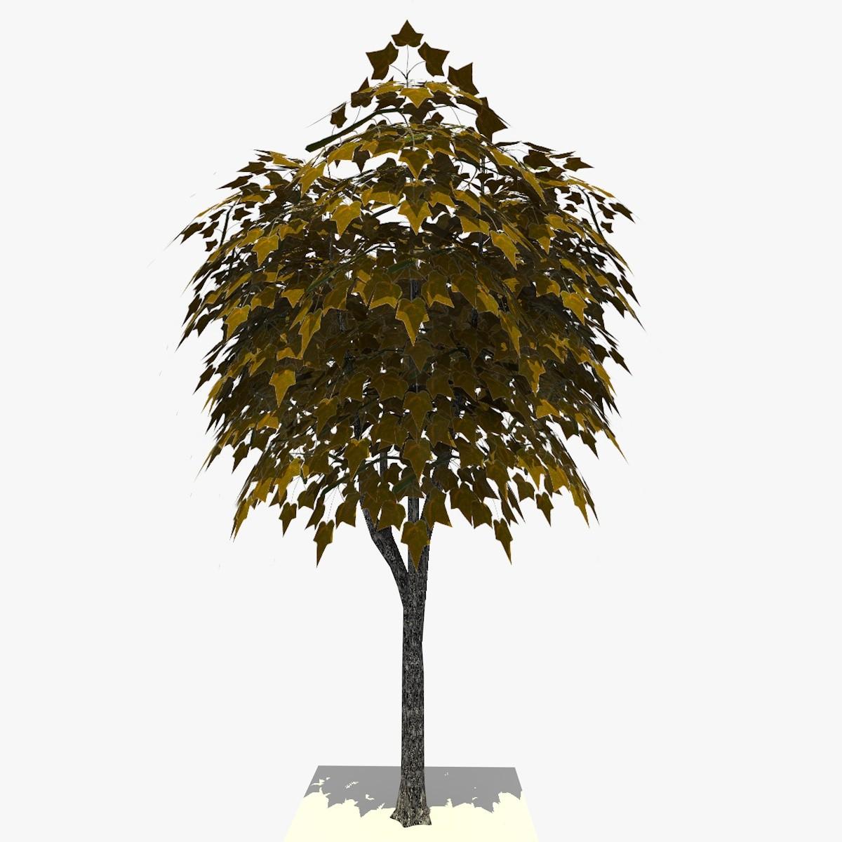 3 TREE 19 1.jpg