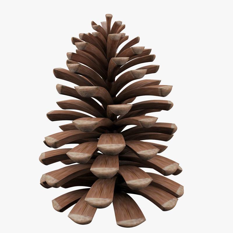 Pine Cone-00.jpg