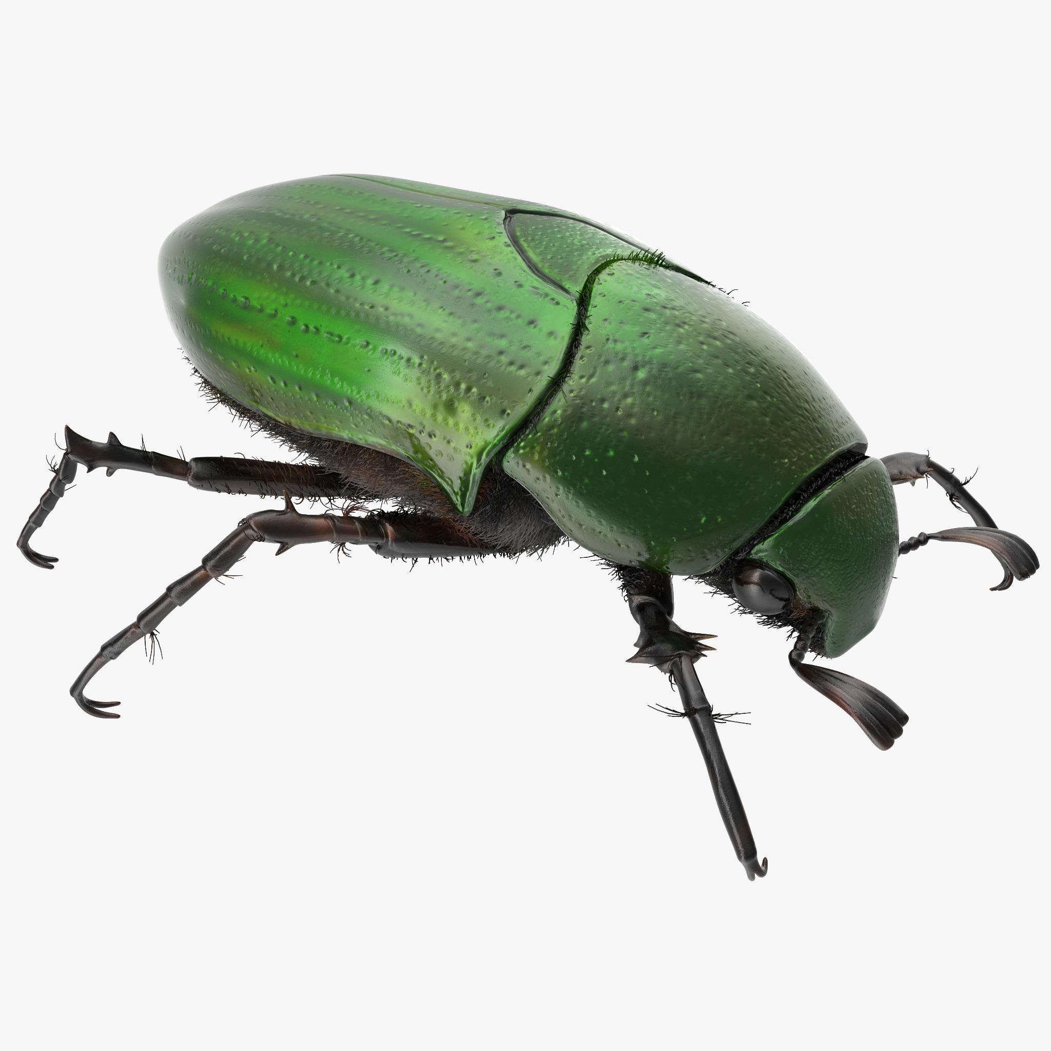 Green Scarab Beetle_1.jpg