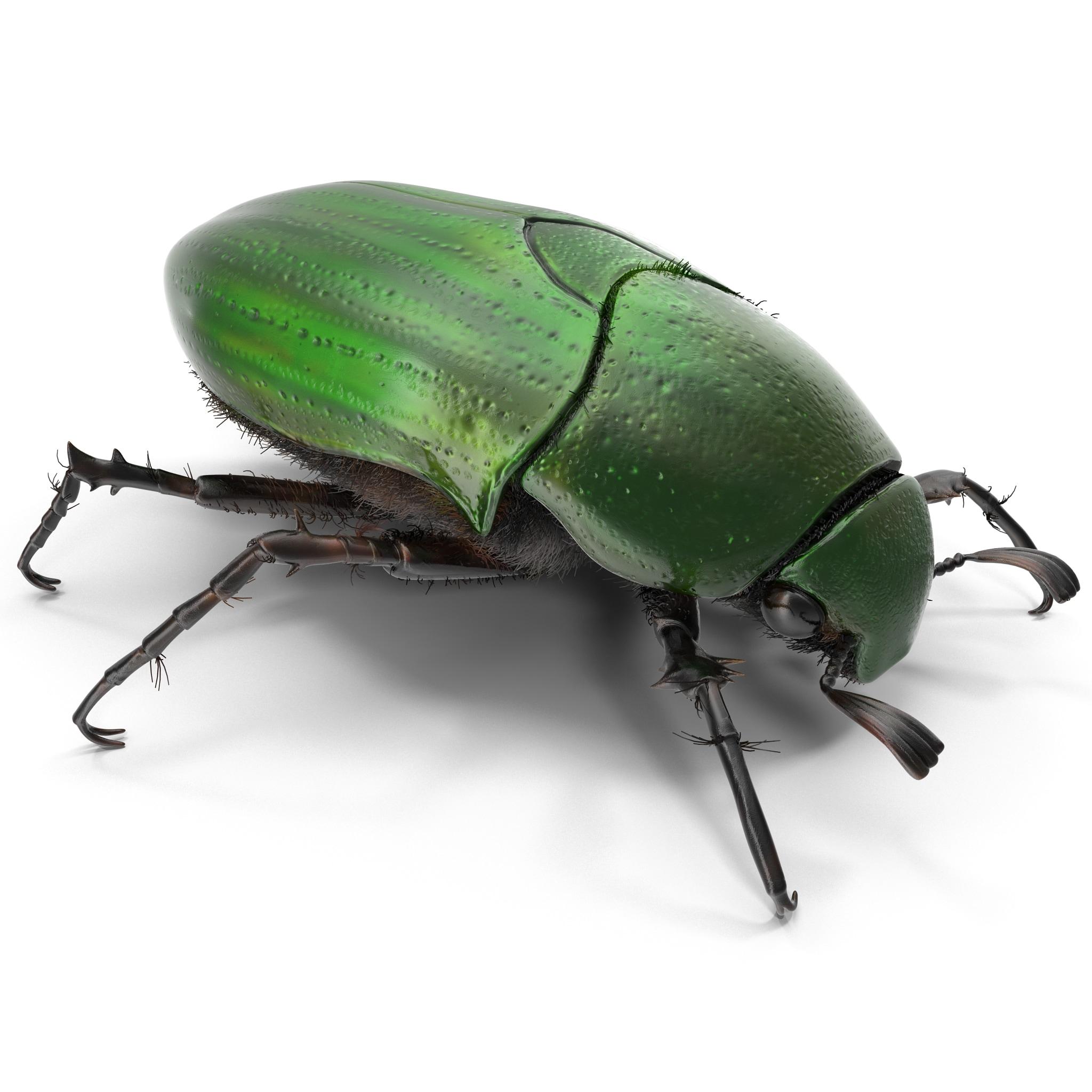 Green Scarab Beetle_2.jpg