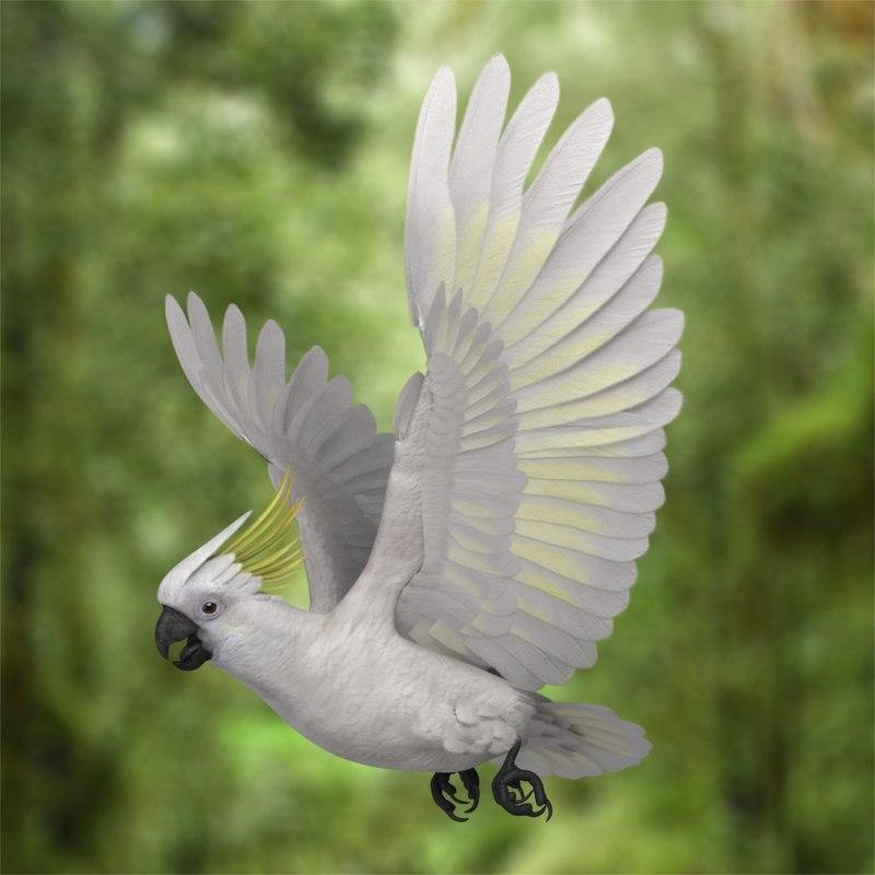 cacatua galerita sulphur crested cockatoo obj