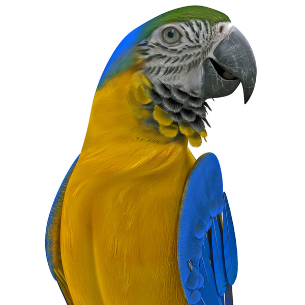 Blue and Gold Macaw Rigged 3D Models