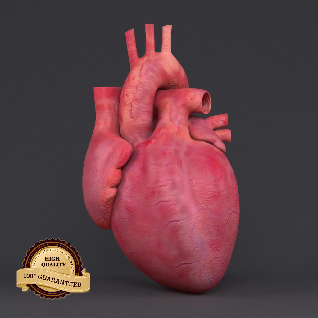 Heart_mesh_col_v02.png