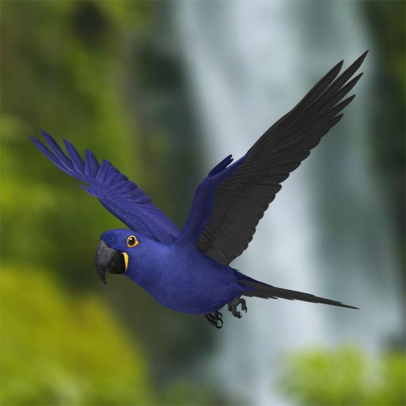 Anodorhynchus Hyacinthinus 'Hyacinth Macaw Parrot'