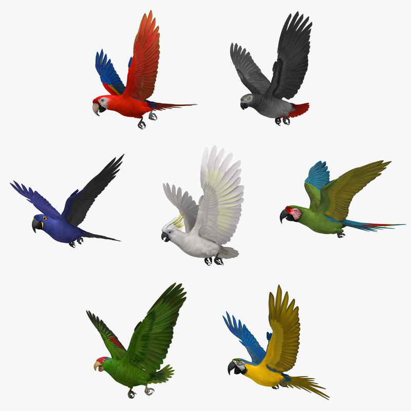 Parrots_Collection.jpg