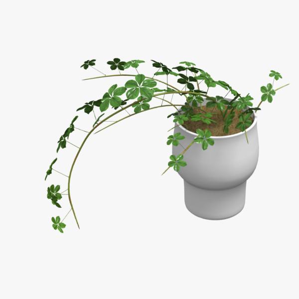 3ds max cissus plant