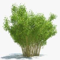 bamboo 3D models