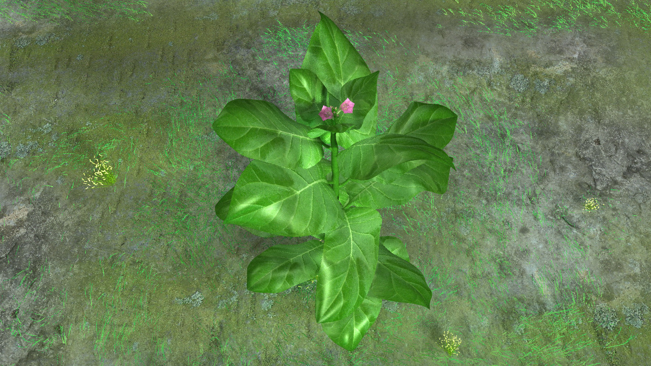 Tobaco plant_01.png
