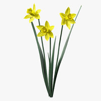 Daffodil 3D models
