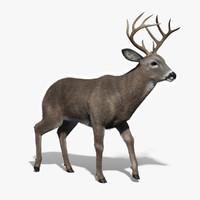 White-tailed Deer 3D models