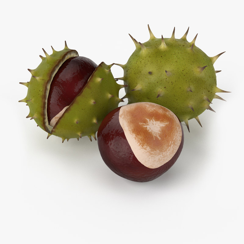 Realistic Chestnut