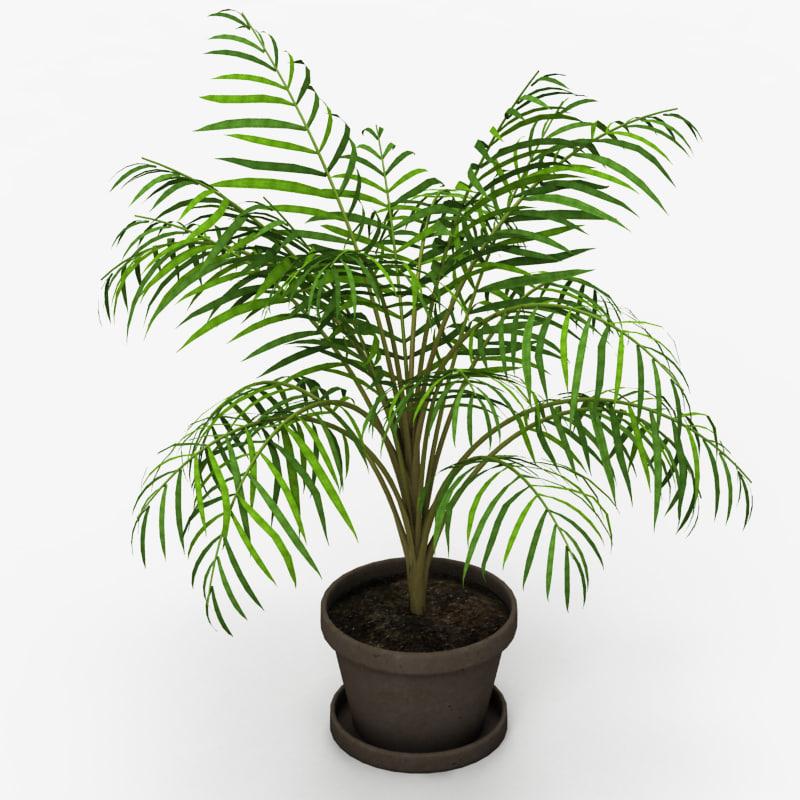 Palm Tree House Plant