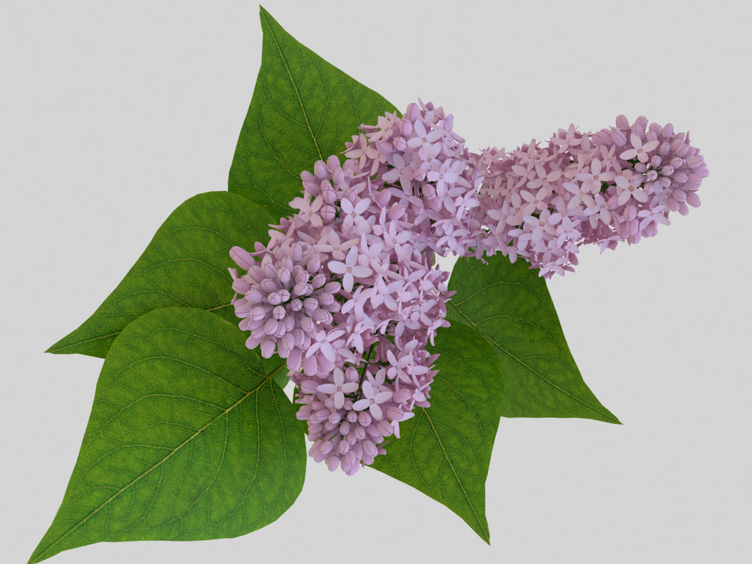 lilac-pinkt5.jpg