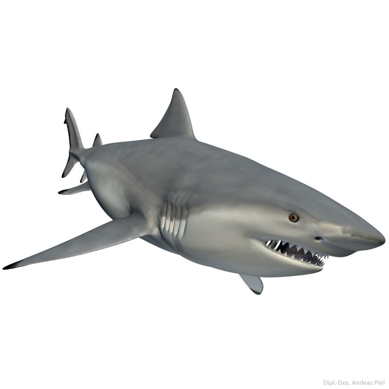 bull_shark_Carcharhinus_leucas_male_3d_model_by_Andreas_Piel_007.jpg