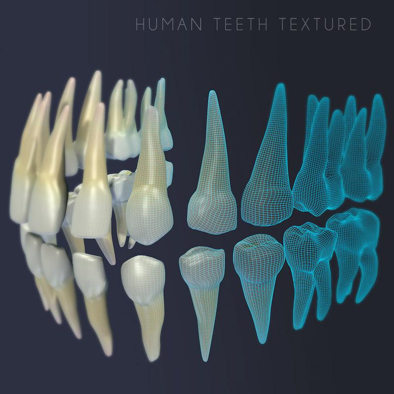 Human Teeth Textured