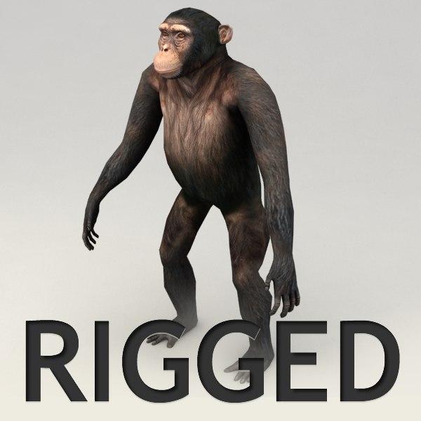 Chimpanzee Rigged Model