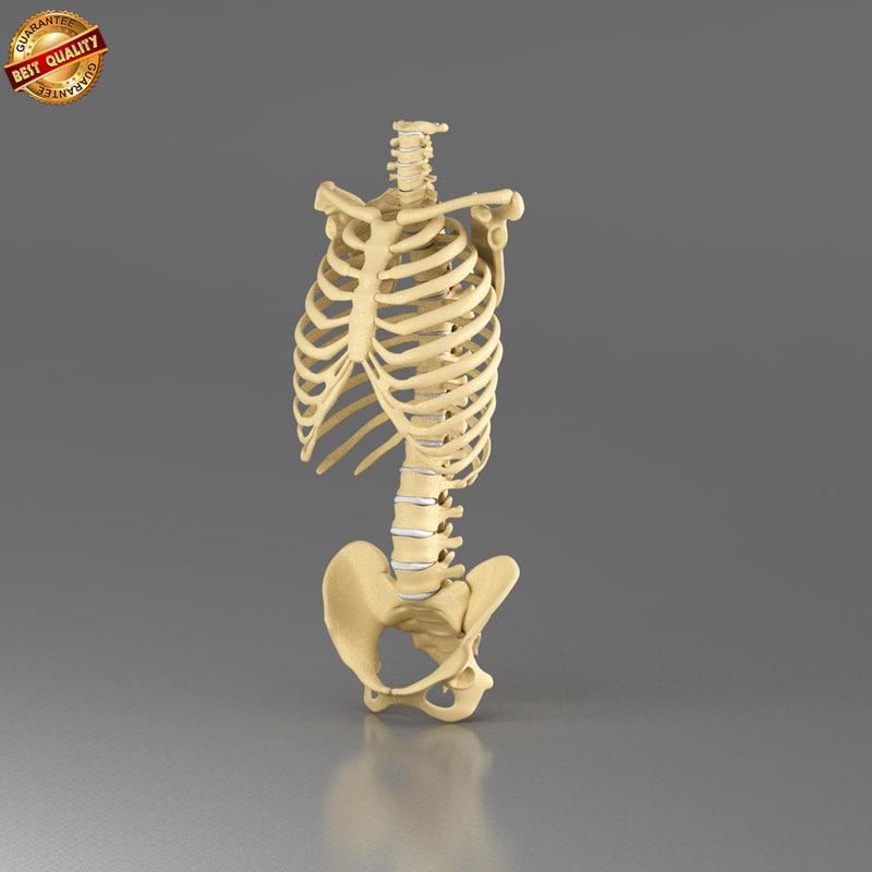 vertebrae_view_1.jpg