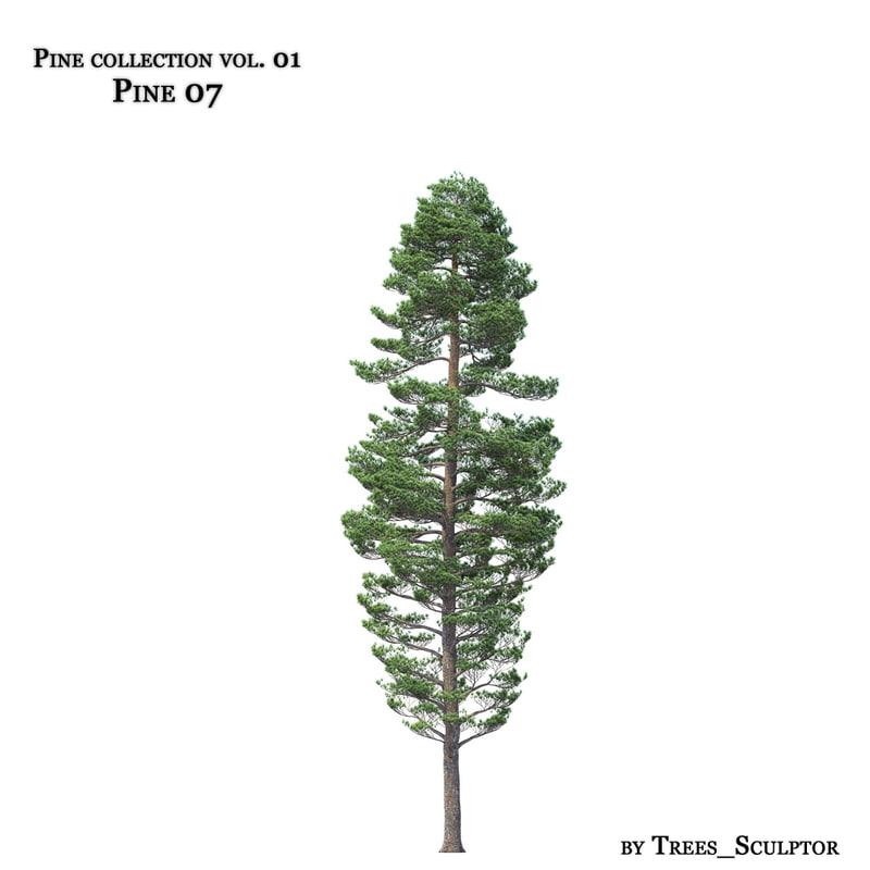 Pine-tree_07