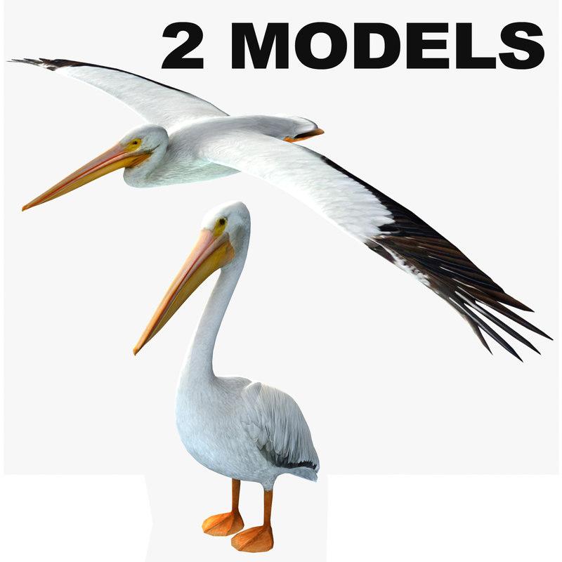 Pelican-2-models.jpg