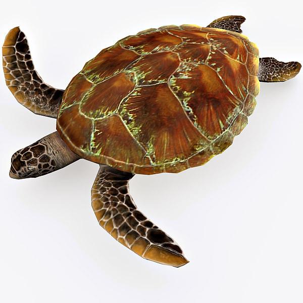 turtle_a.jpg