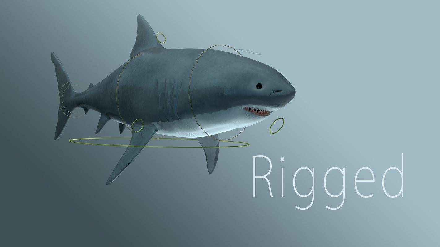 shark_1.jpg