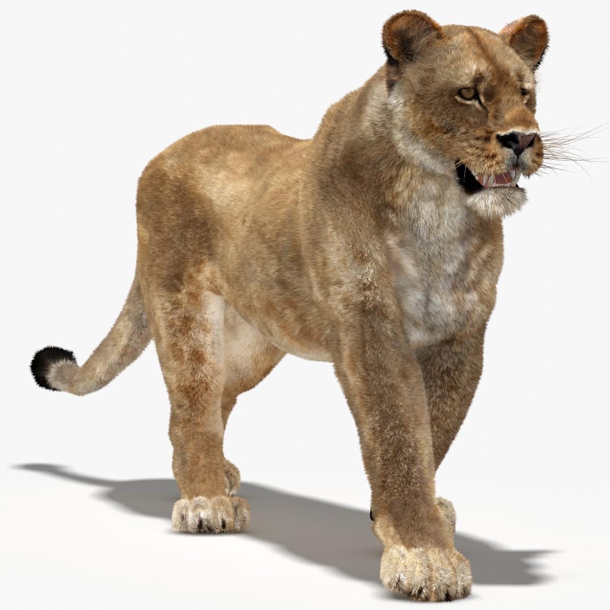 Lioness-00.jpg