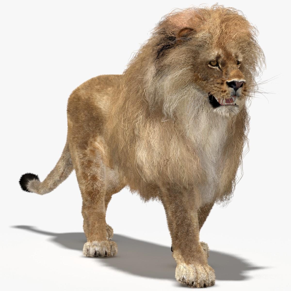 Lion-00.jpg