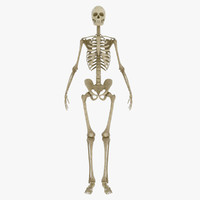 Male Skeleton 3D models