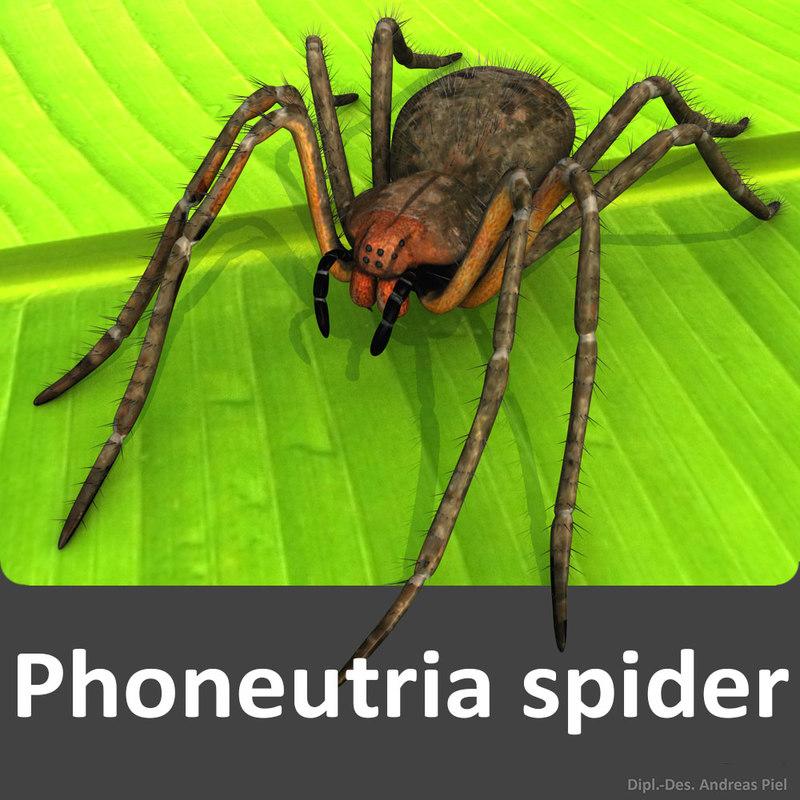 Phoneutria_spider_3D_model_by_Andreas_Piel.jpg