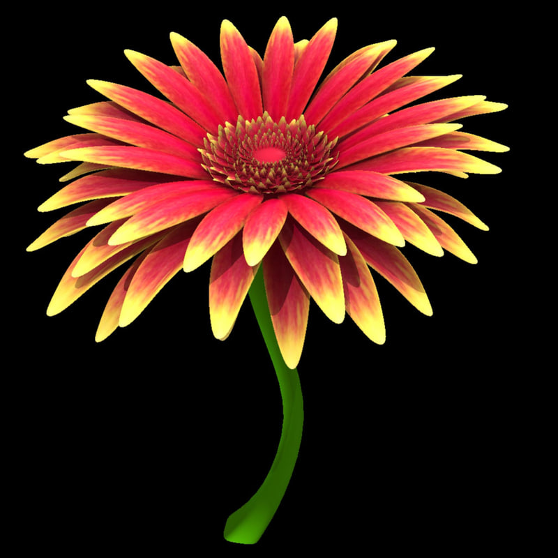 3d gerbera modeled model