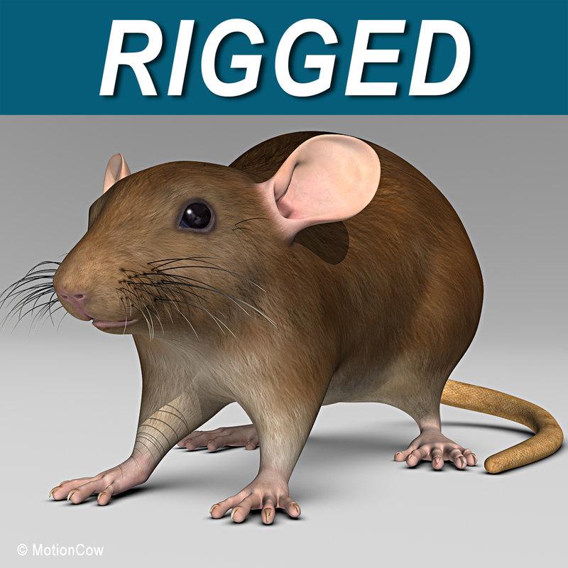 Rat_Brown_AA.jpg
