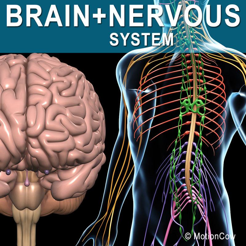 Brain_Nervous_A.jpg