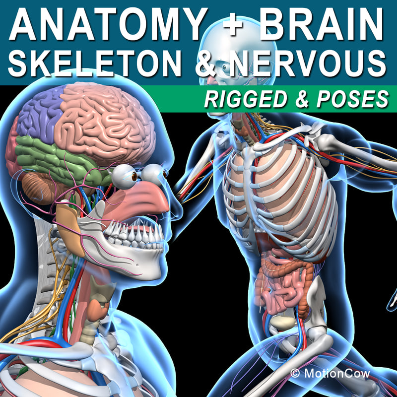 Published detailed descriptions of the human anatomy