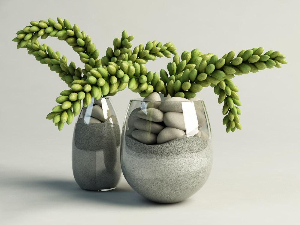 cactus succulent in glass