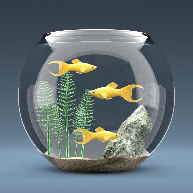 Aquarium Full1