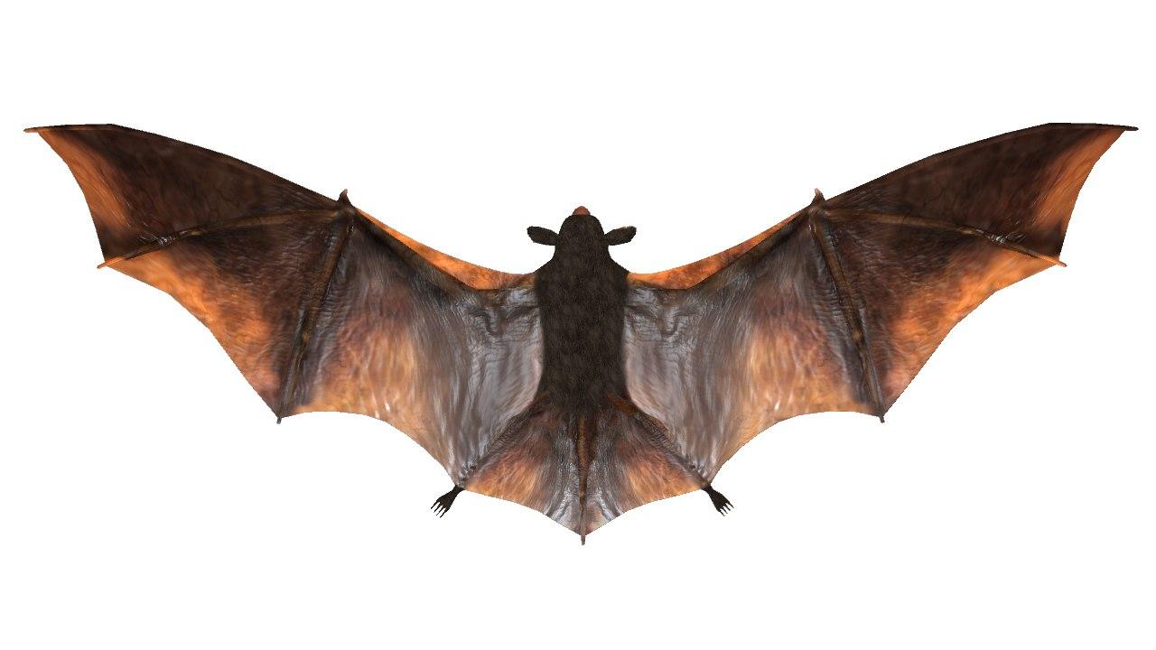 Bat_05.png