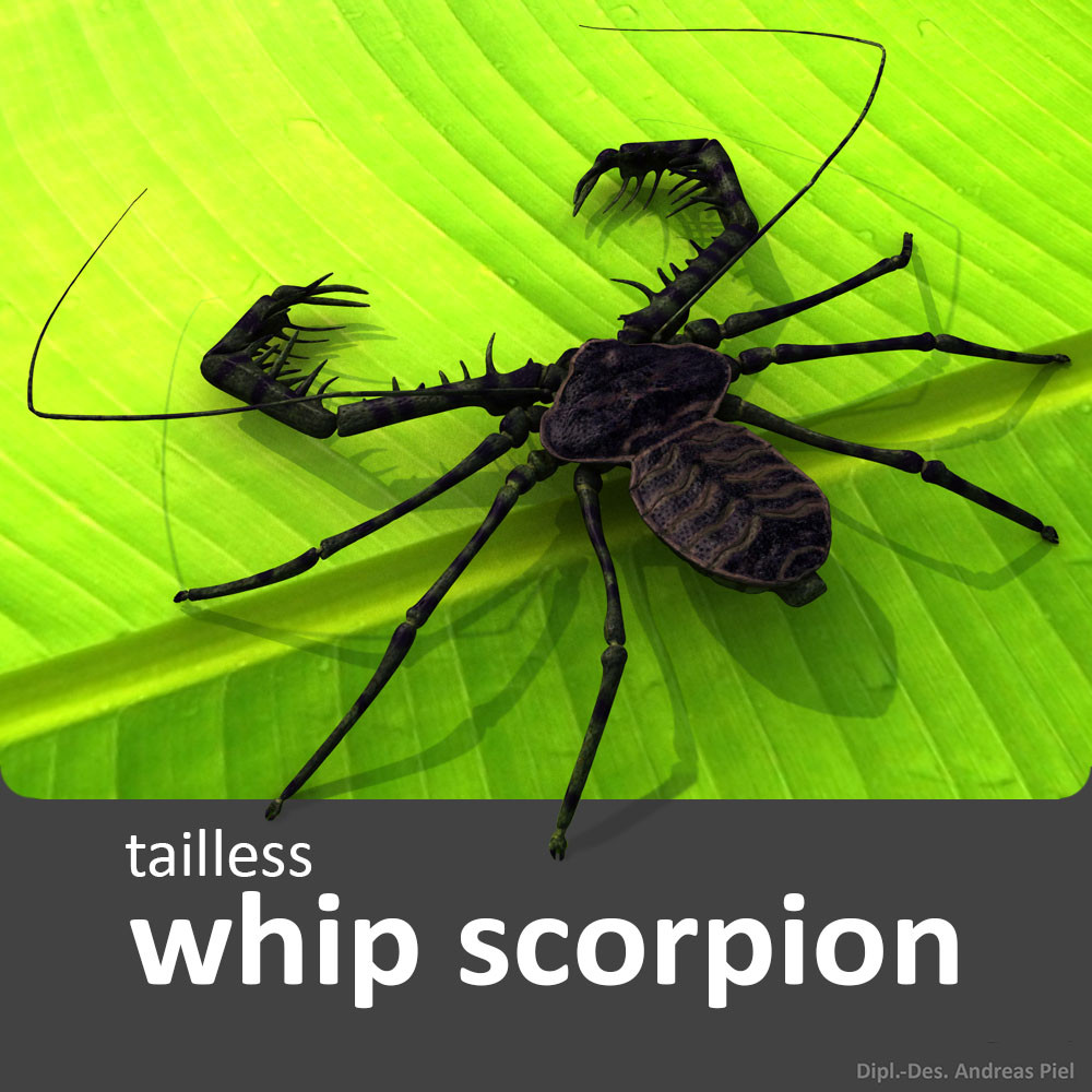 tailless_whip_scorpion_3d_model_by_Andreas_Piel.jpg