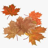 leaf 3d models