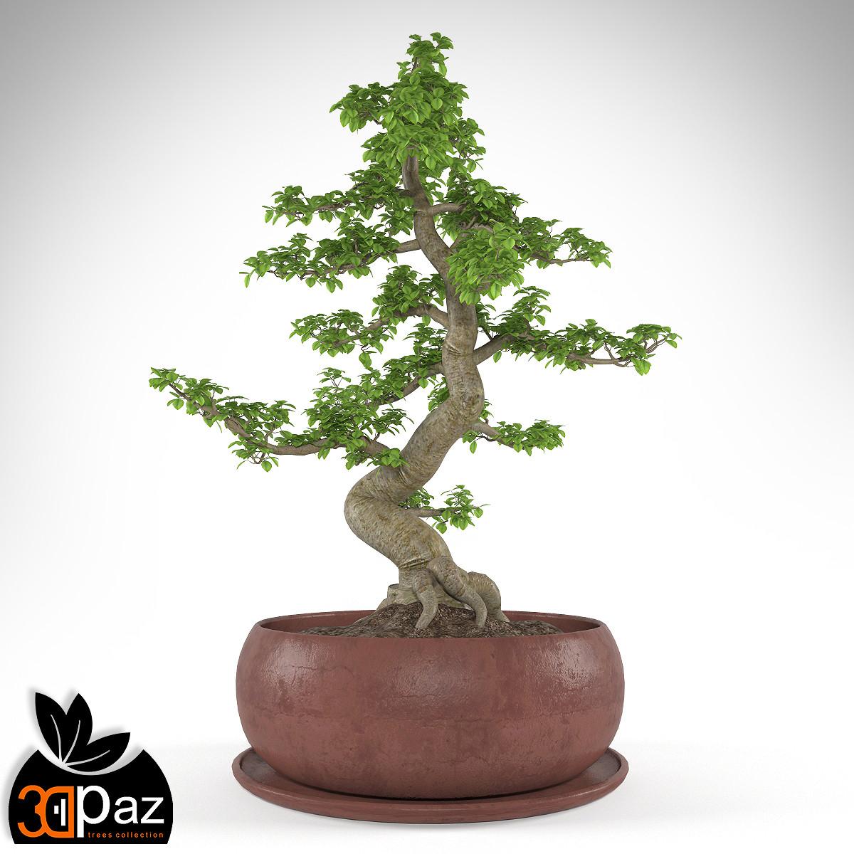 ficus_bonsai_by_3DPaz_pic_01.jpg