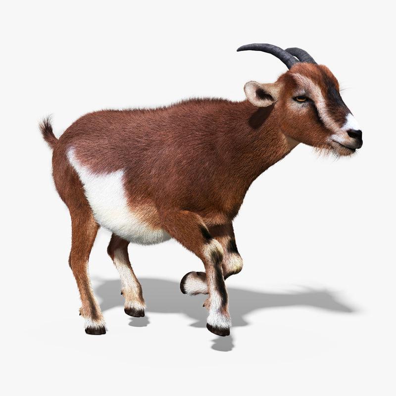 Goat_FUR_23.jpg
