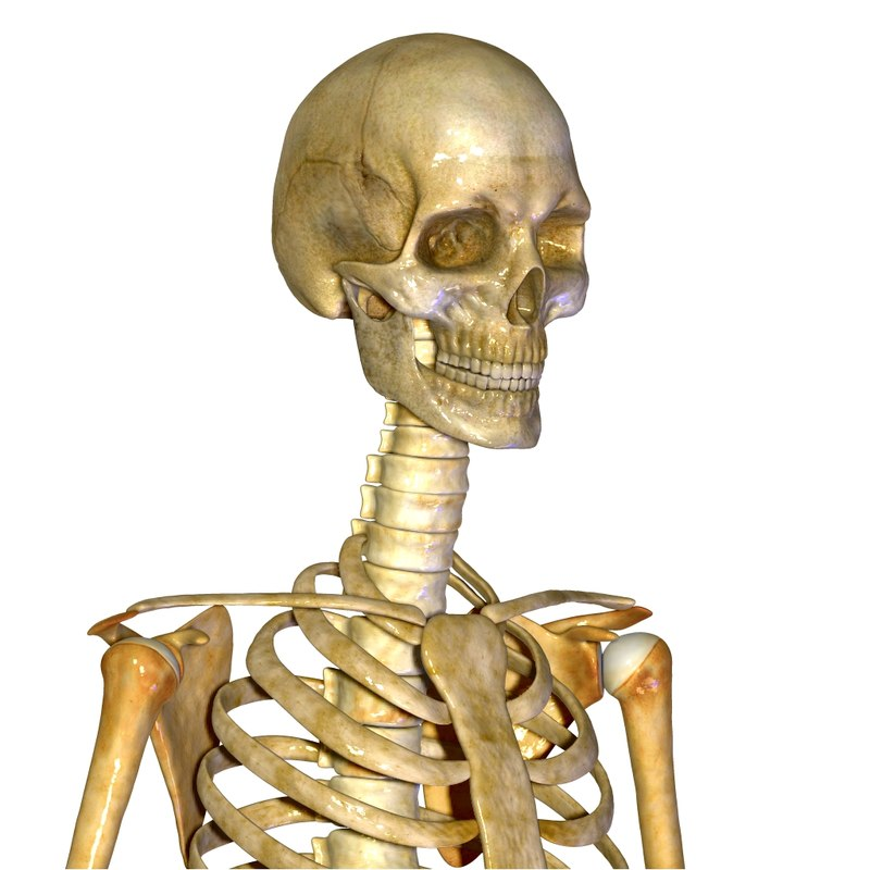 skeletonzooo.jpg
